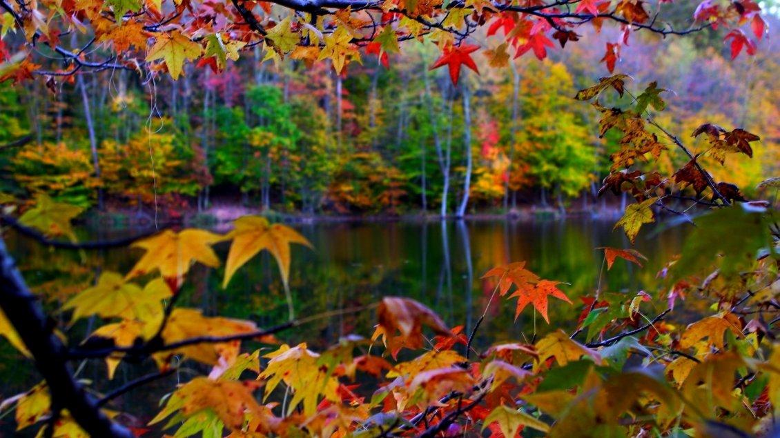 autumn wallpapersautumn picautumn picturesautumn - photo #26