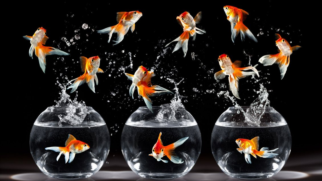 Download Wallpaper Many fish in the air and three aquariums