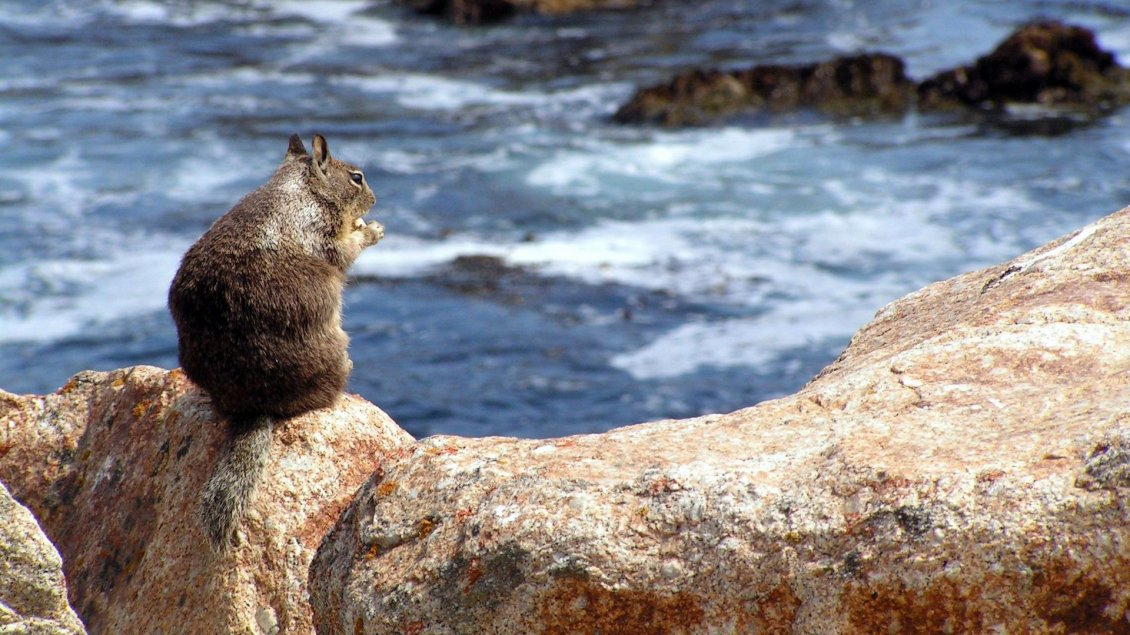 Download Wallpaper A squirrel on rocks on the shore of water