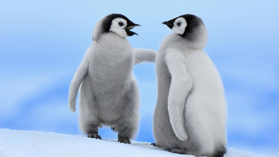 Download Wallpaper Very cute white penguins with black head