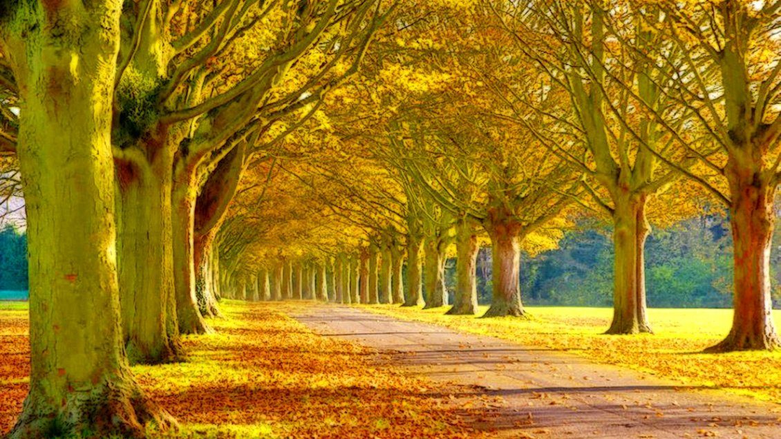 Download Wallpaper Autumn time - trees and leaves in the park