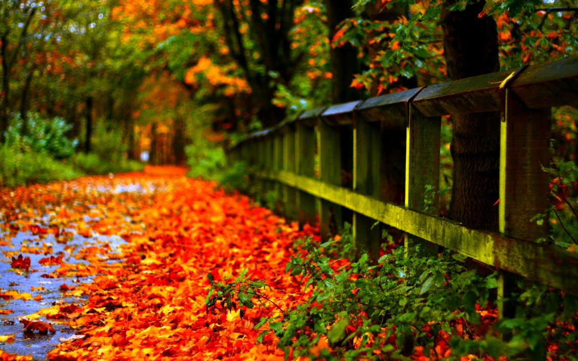 Download Wallpaper Carpet of autumn leaves in th park - HD wallpaper