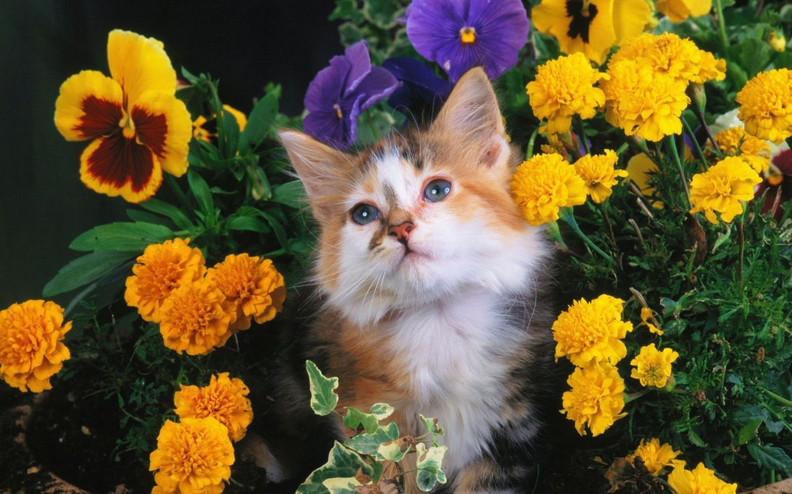 Download Wallpaper Sweet cat between flowers in a garden