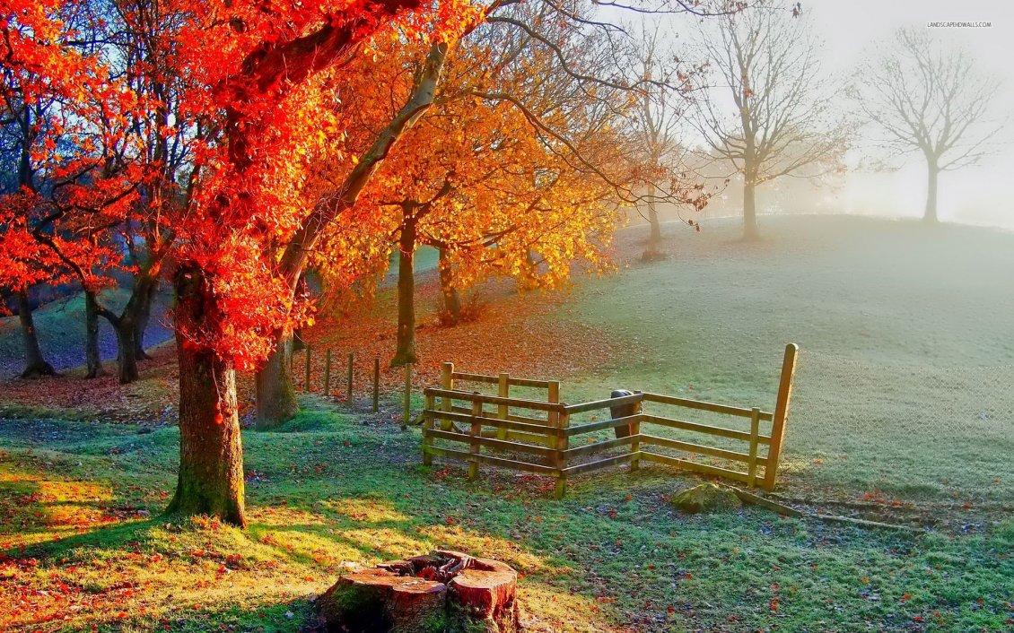 Beautiful Autumn Painting Sunlight On The Field