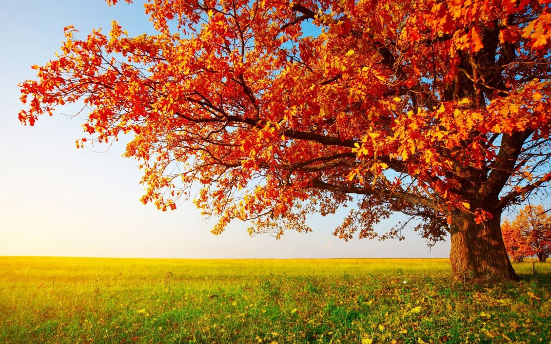 Download Wallpaper Big tree in the middle of autumn season - HD wallpaper