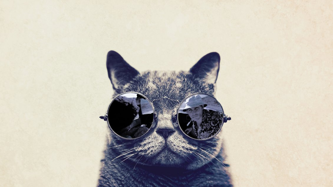 Fashion Cat With Sunglasses Hd Funny Wallpaper