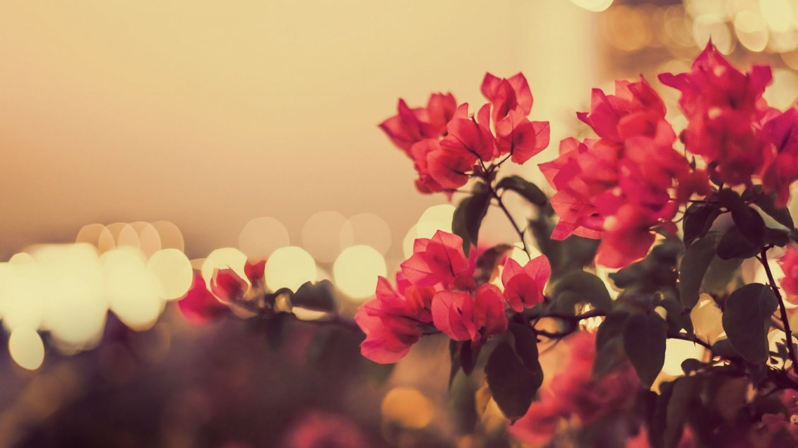Download Wallpaper Vintage red flowers in the garden - blurry background