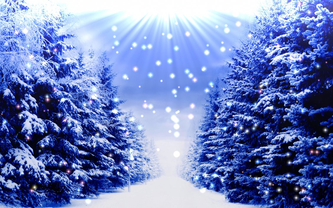 Download Wallpaper Blue christmas trees full with white snow