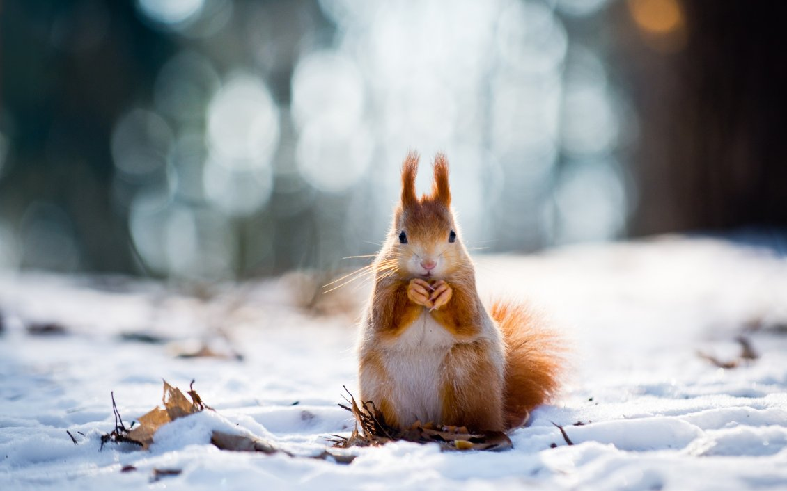 Sweet Little Squirrel In The Snow Winter Wallpaper