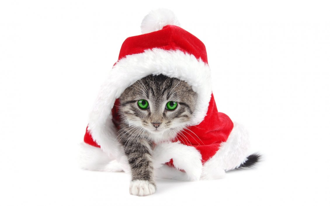 Download Wallpaper Sweet little kitty in Santa's costume