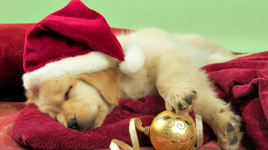 Download Wallpaper Sweet little Golden Retriever dog with Christmas hat
