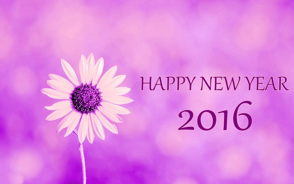 Download Wallpaper Purple flower power - Happy New Year 2016