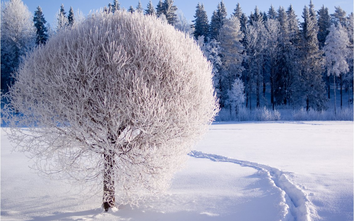 Beautiful white frozen tree hd winter season - Beautiful frozen computer wallpaper ...