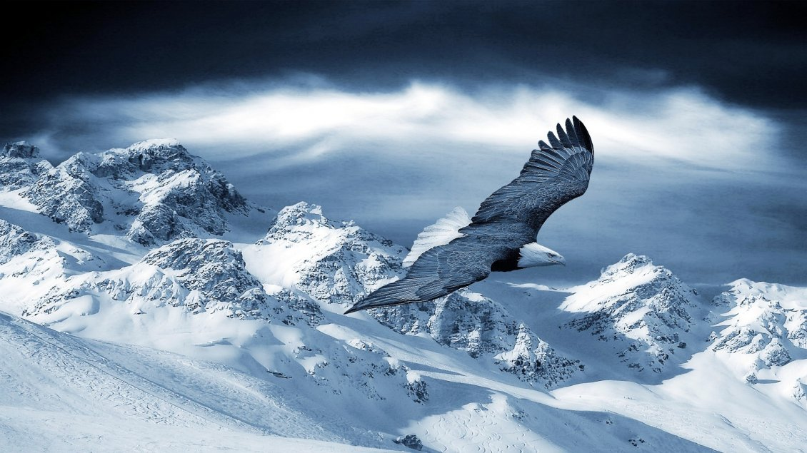 Beautiful Eagle Fly Over The White Mountains