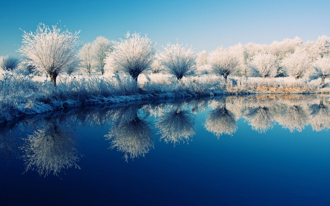 Frozen Trees On The Edge Of The Lake Beautiful Mirror