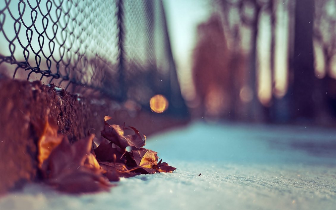 Download Wallpaper Autumn leaves in the snow - HD macro wallpaper