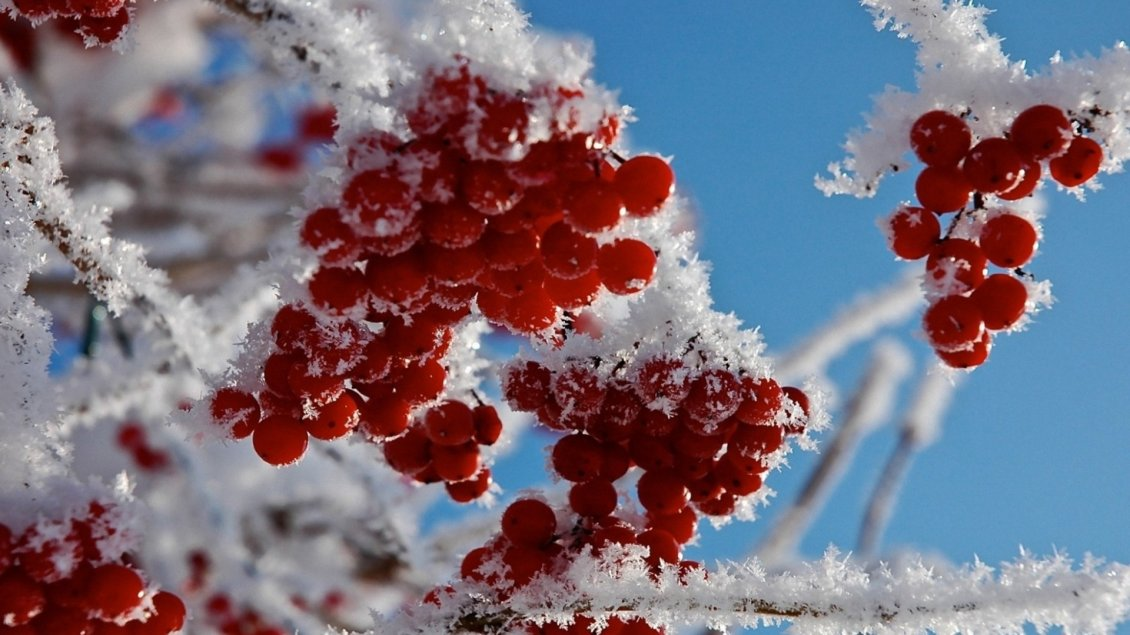 Download Wallpaper Red frozen fruits - cold winter time for nature