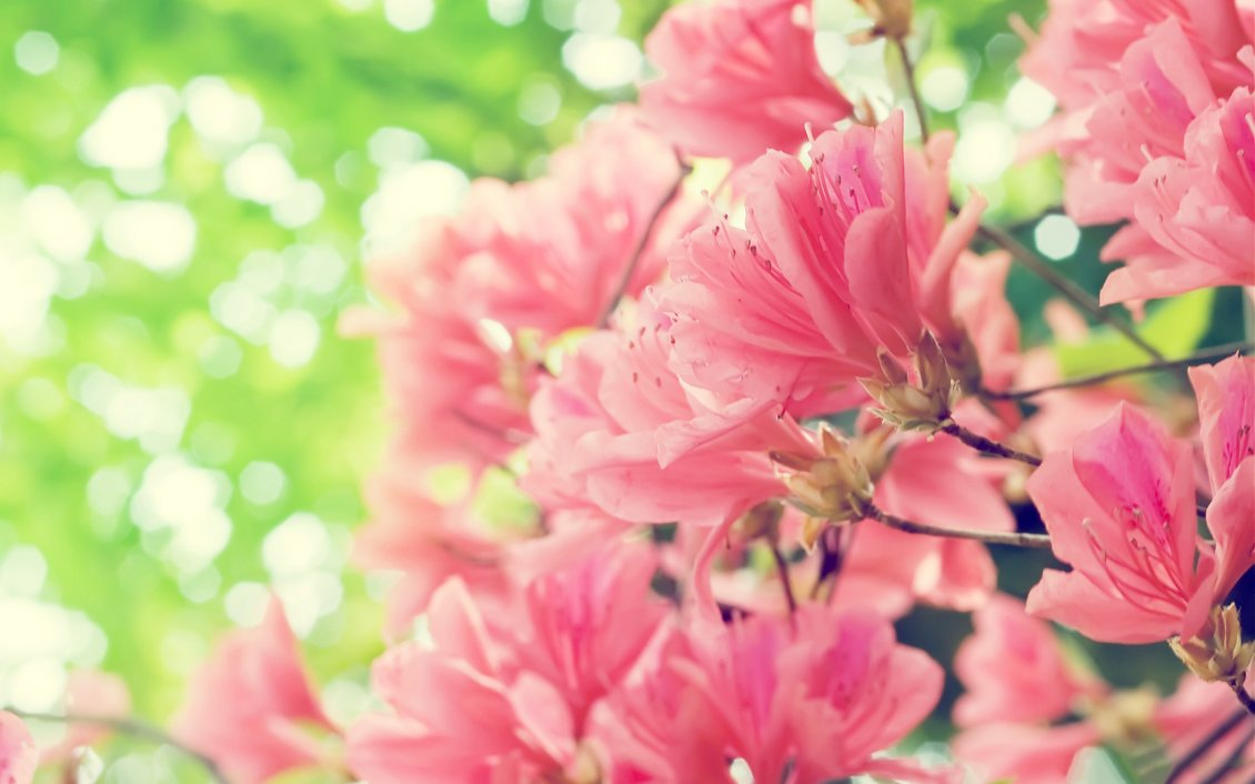 Download Wallpaper Beautiful pink spring flowers - HD nature wallpaper