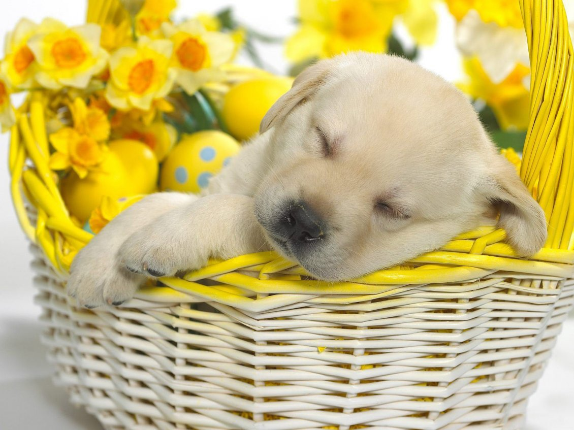 Download Wallpaper Beautiful sweet puppy sleeping in a basket with flowers