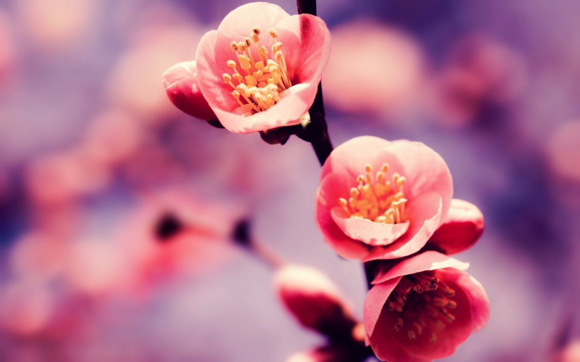 Download Wallpaper Pink spring flowers - blossom tree