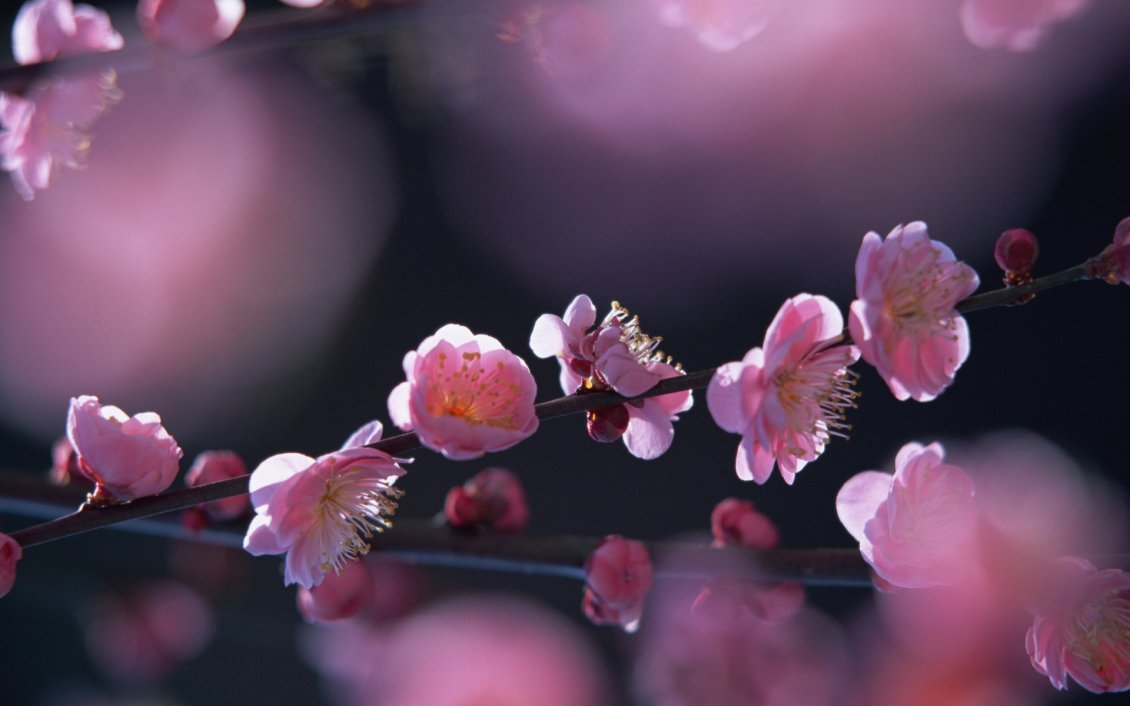 Sunny Spring Day Beautiful Tree Flowers