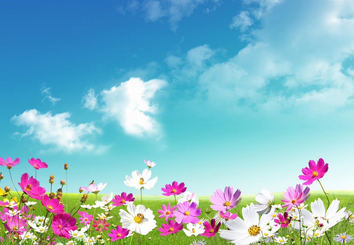 Download Wallpaper Colourful spring time - perfume from the flowers