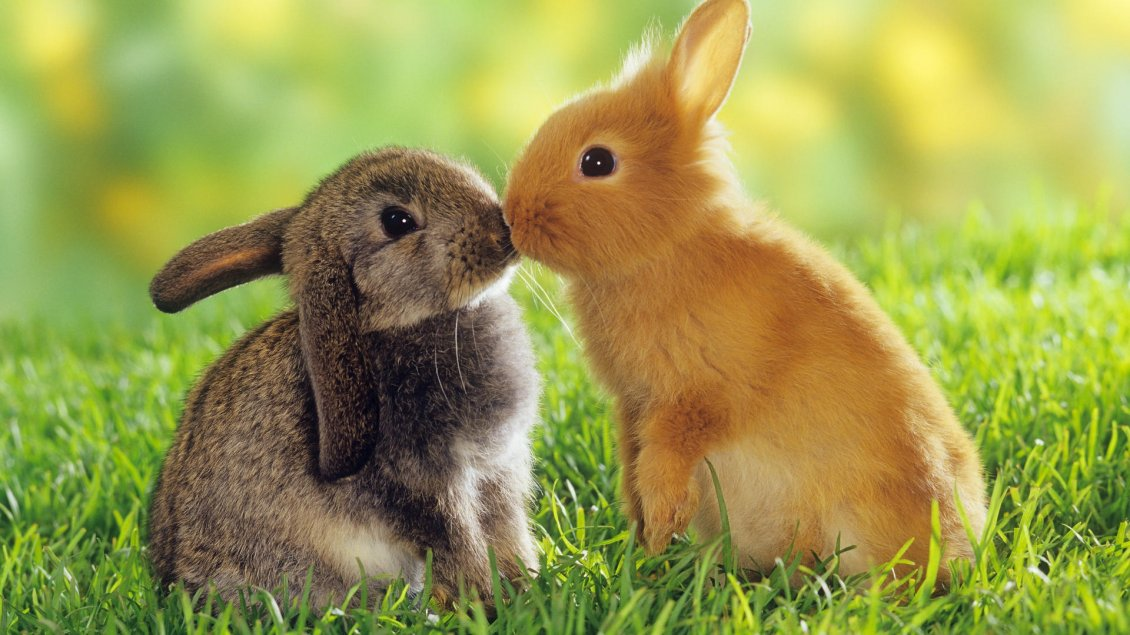 Download Wallpaper Two lovely rabbits - sweet animals in the grass
