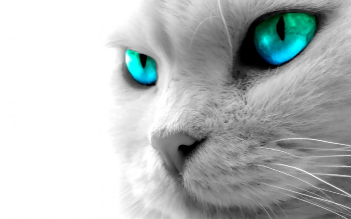 Download Wallpaper Beautiful cat with blue digital eye - HD wallpaper