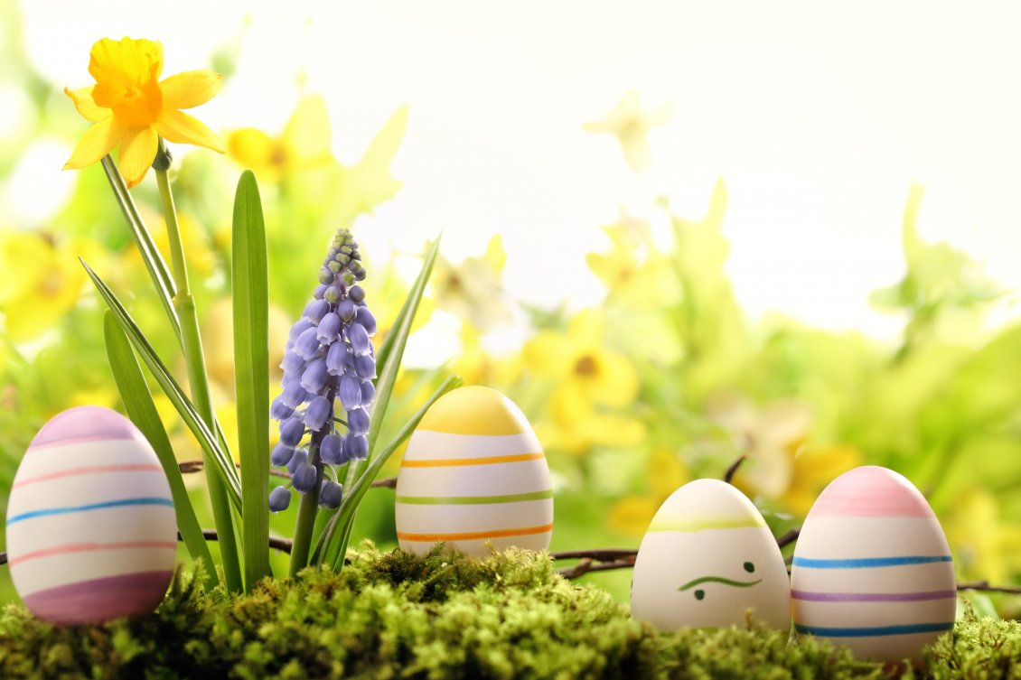 Download Wallpaper Easter eggs hiding in the garden