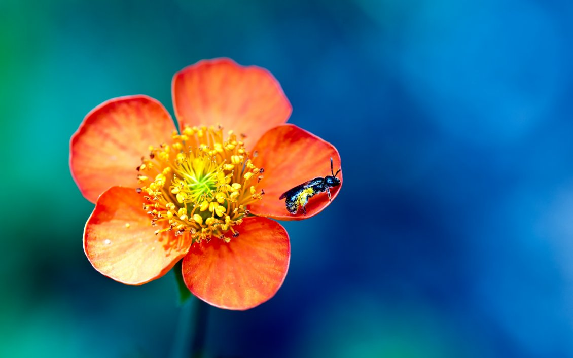 Download Wallpaper Little insect on a beautiful spring flower - macro wallpaper
