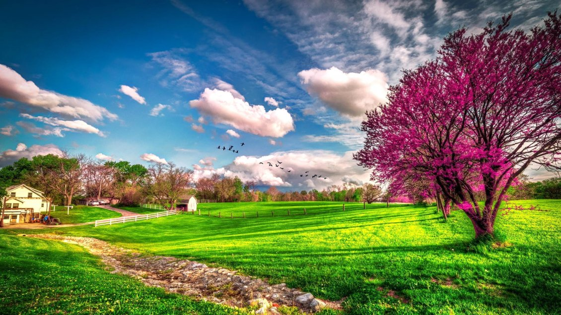 Landscape beautiful spring nature hd wallpaper - 10k wallpaper nature ...