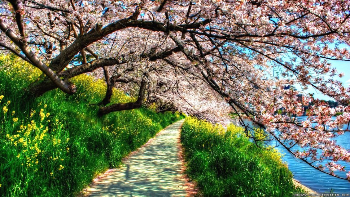 Download Wallpaper Path under the blossom trees - HD spring wallpaper