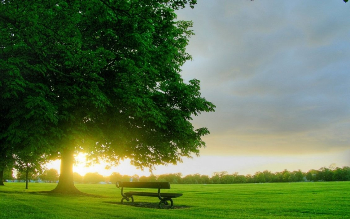 Download Wallpaper Beautiful sunrise on the green grass in the park