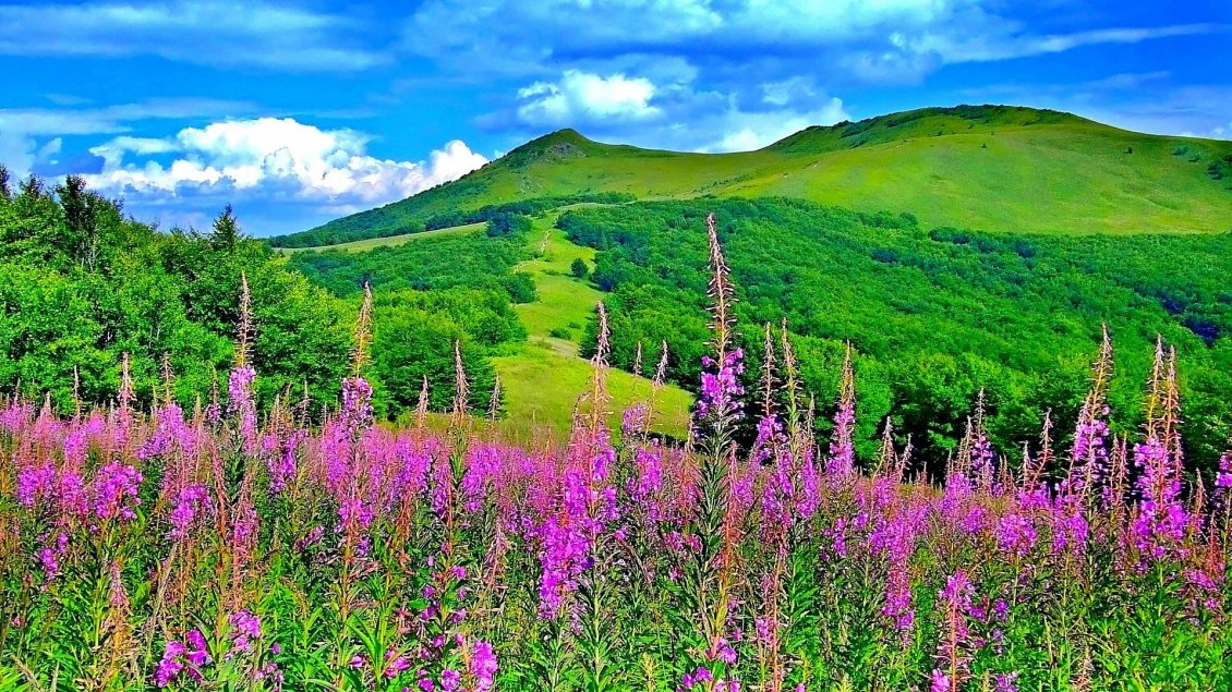 Download Wallpaper Wonderful spring colours in the nature-flowers and mountains