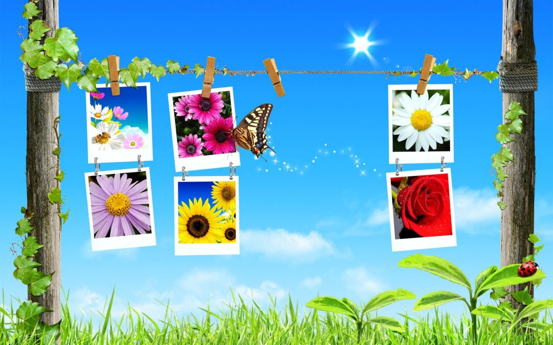 Download Wallpaper Photos with flowers in the spring season