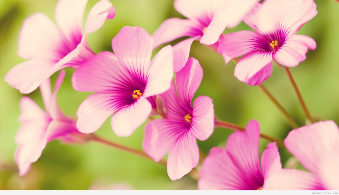 Download Wallpaper Pink spring flowers - beautiful season