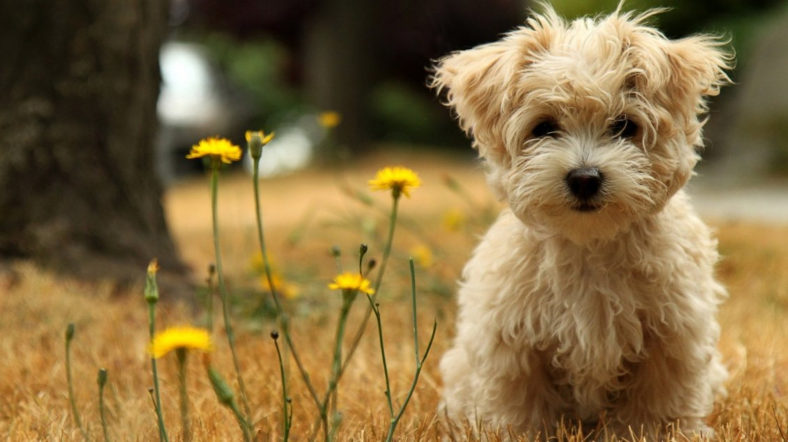 Download Wallpaper Brown little dog and some yellow flowers