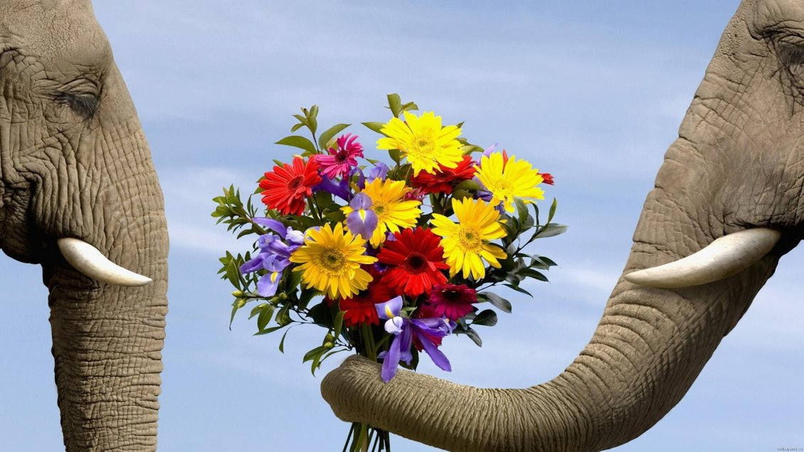 Download Wallpaper Pure animal love - two elephants and a bouquet of flowers