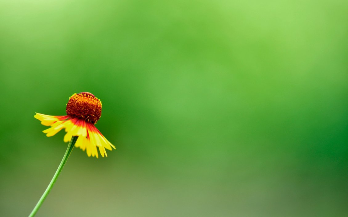 Download Wallpaper Abstract yellow flower on a green background