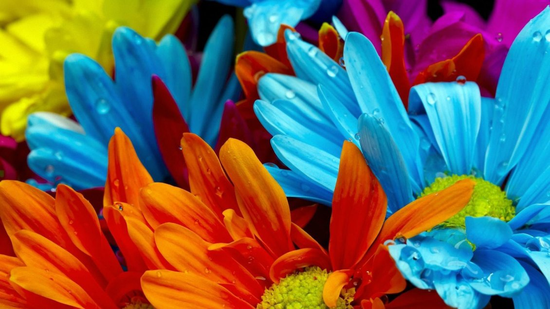 Download Wallpaper Intense colours on a beautiful flowers