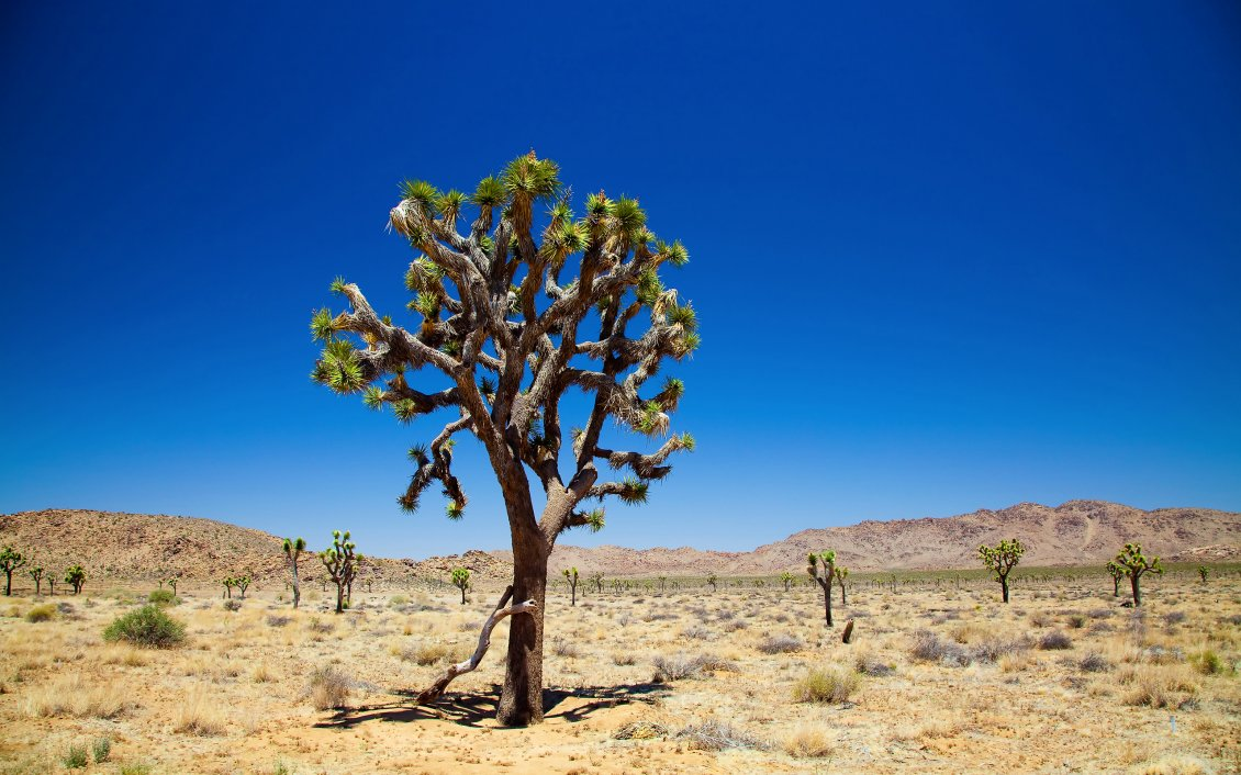 Trees In The Dessert Hot Summer Season