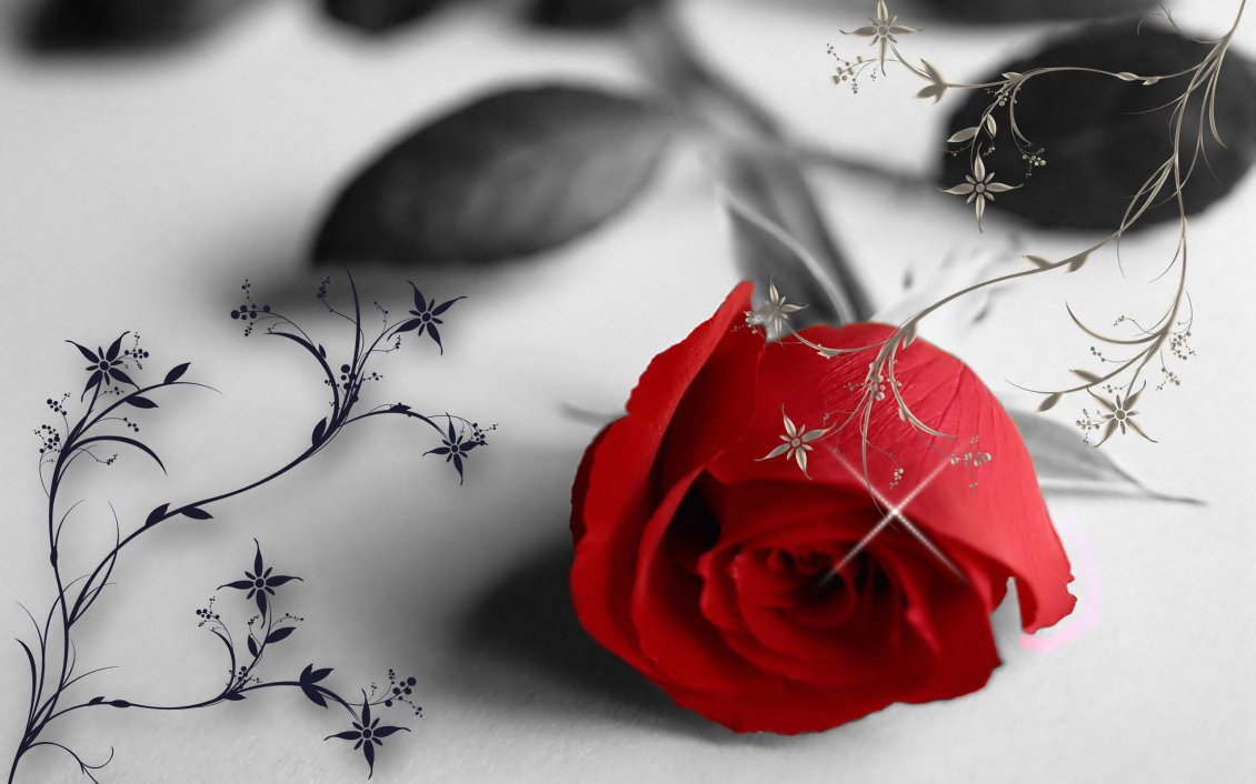 Red rose in a black and white wallpaper love moments mightylinksfo