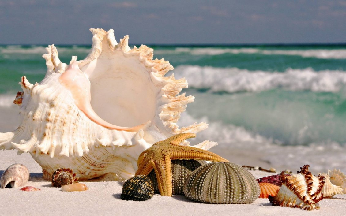 Download Wallpaper Starfishes and shells on the beach - HD beautiful wallpaper