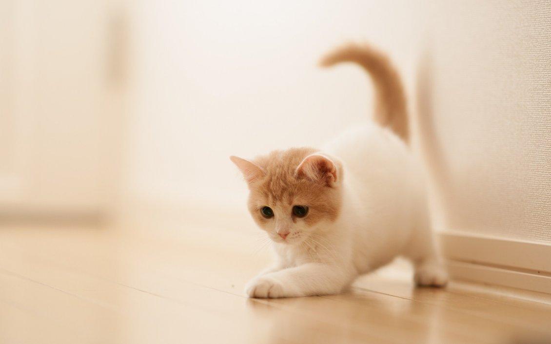 sweet little cat - cute animal wallpaper