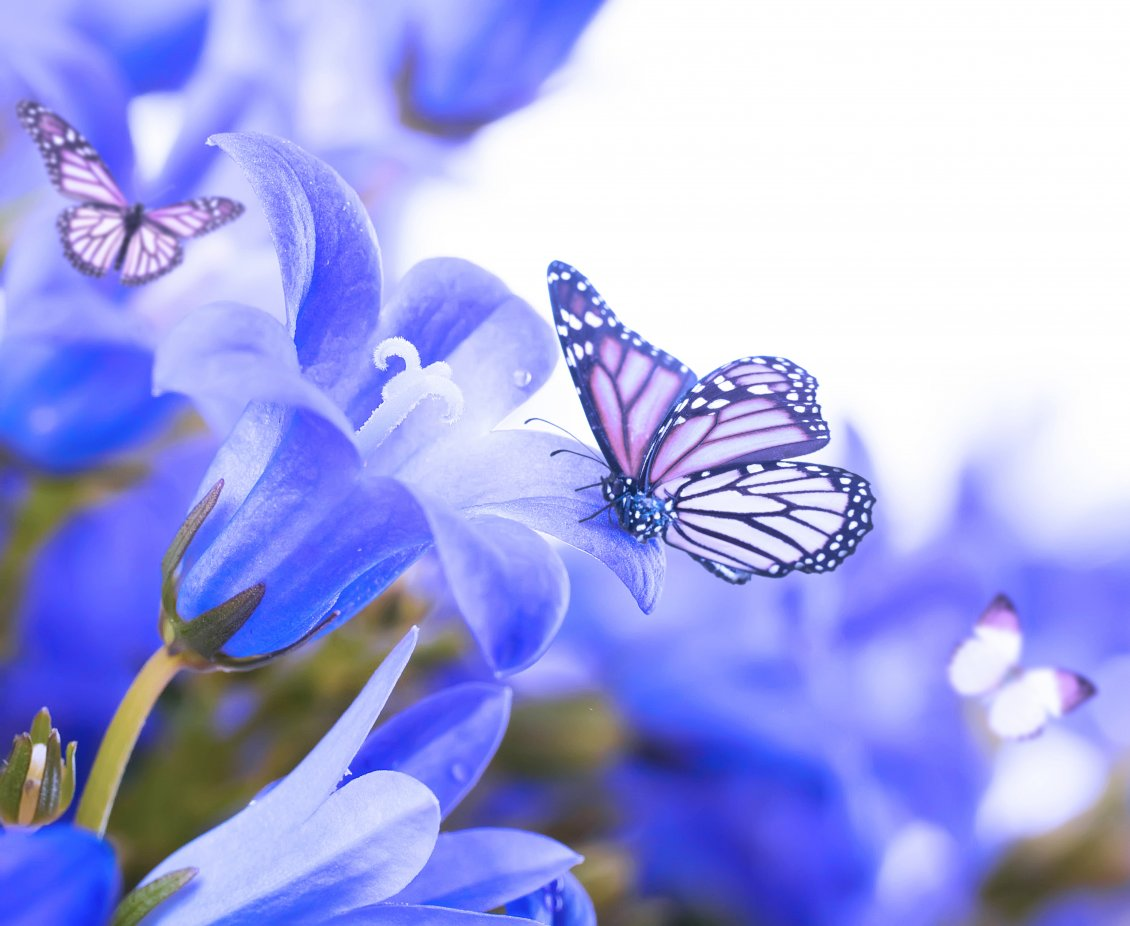 Download Wallpaper The magic created by butterflies - beautiful moments