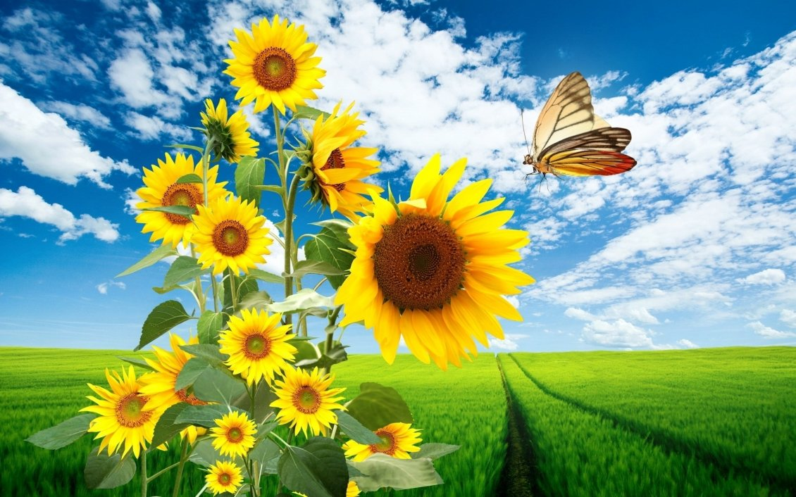 Big Sunflowers And A Beautiful Butterfly Hd Wallpaper