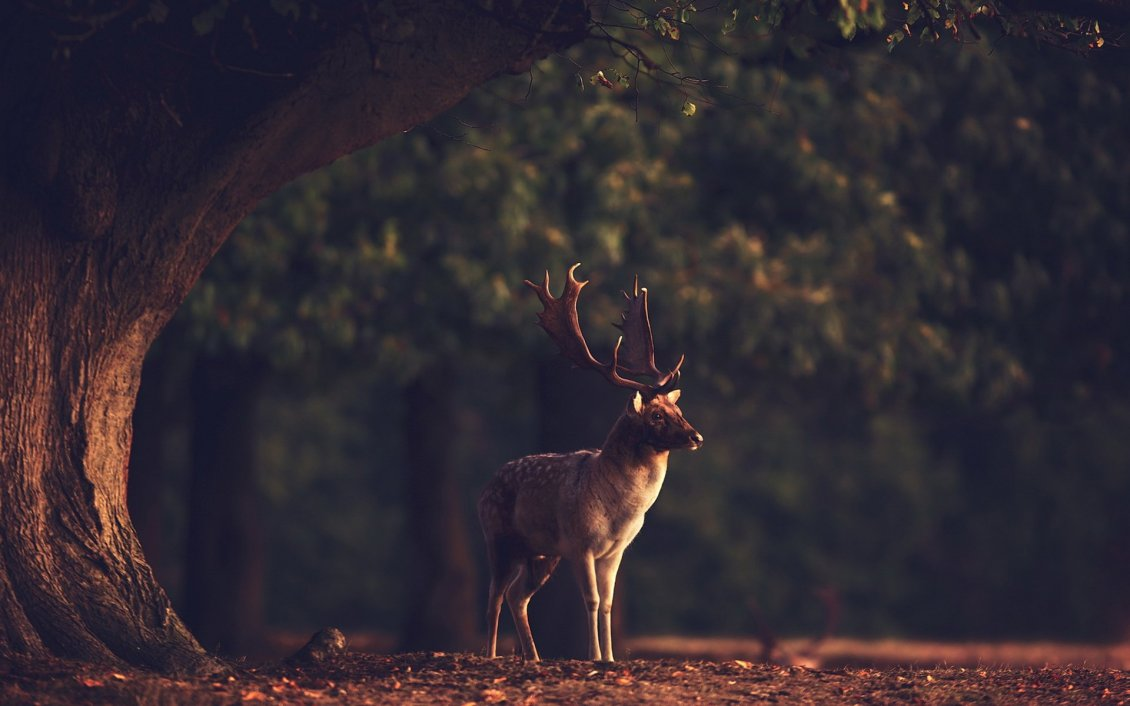 Technology Management Image: Professional Photo With A Deer In The Forest