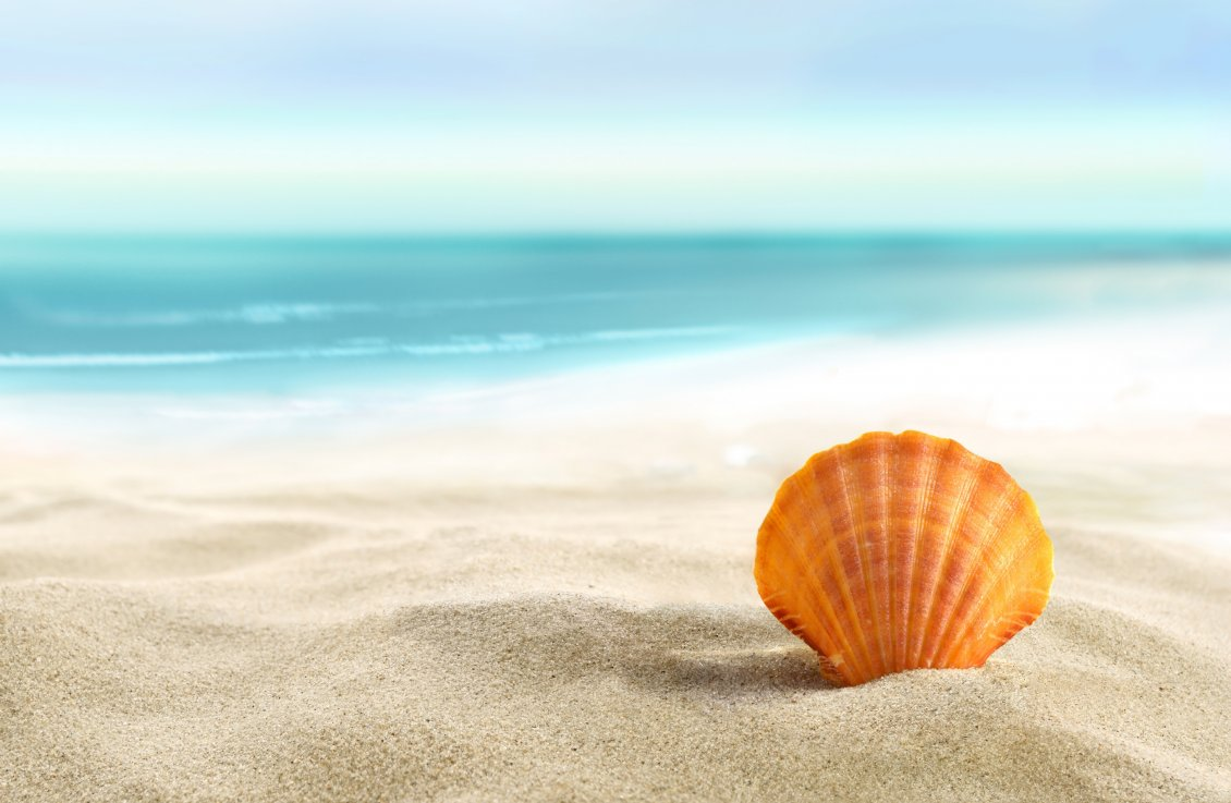Download Wallpaper Orange shell in the sand - summer holiday at the beach