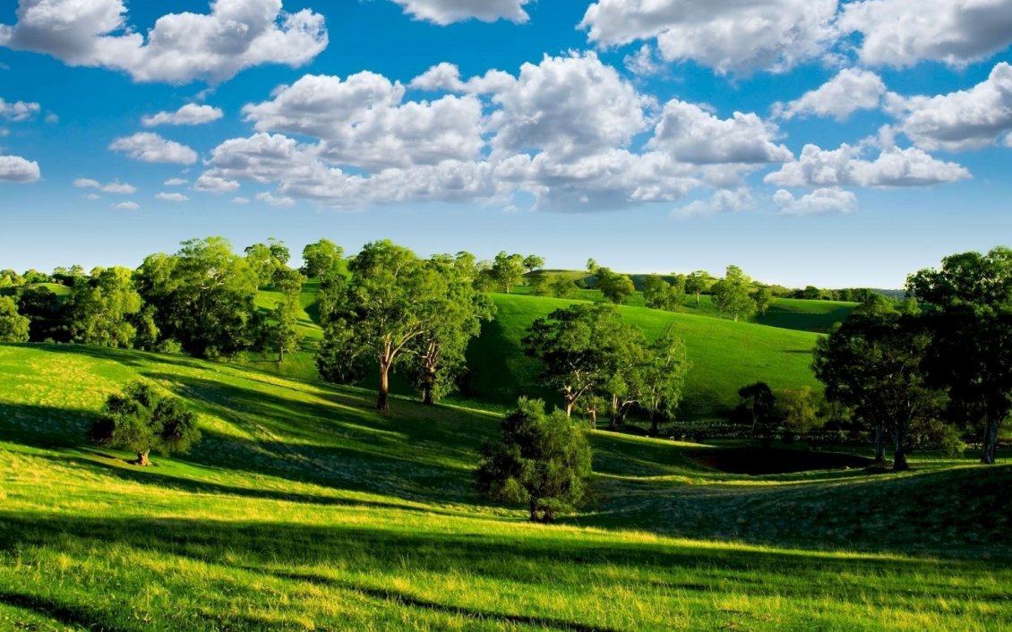 Download Wallpaper Green nature - trees on the field and beautiful blue sky
