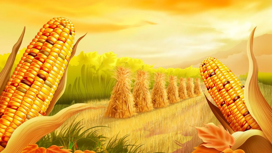 Maize Wallpaper: Corn Ready To Harvest